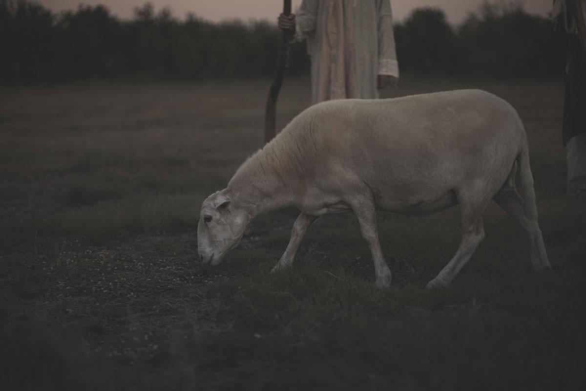 The Shepherd Role